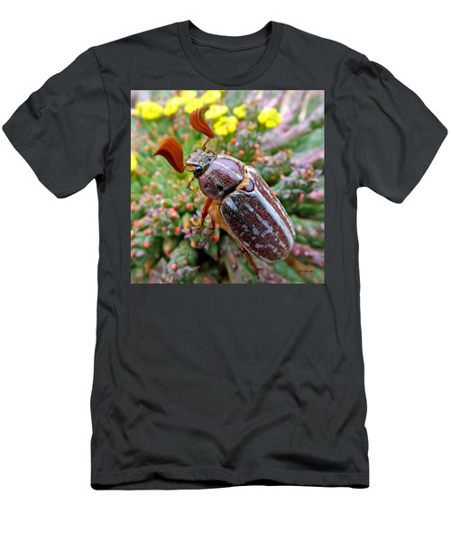 Chafer Beetle On Medusa Succulent 2 Men's T-Shirt (Athletic Fit)