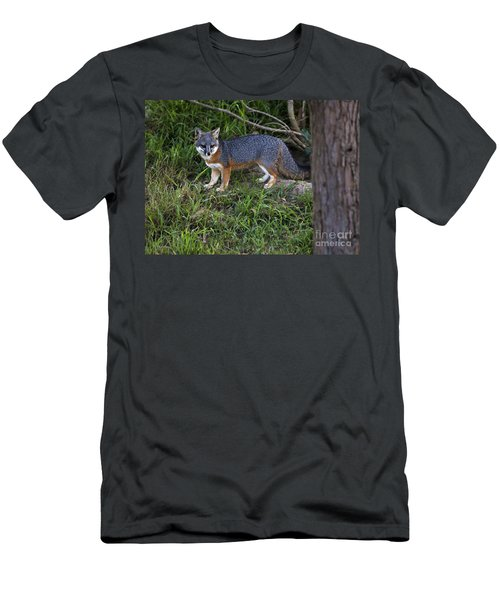 Channel Island Fox Men's T-Shirt (Athletic Fit)