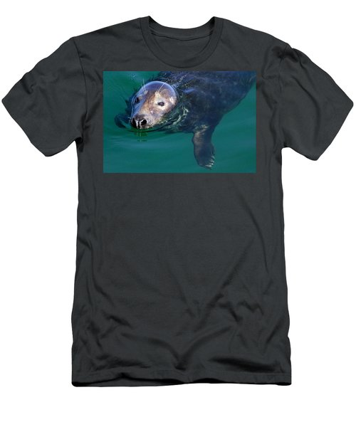 Chatham Harbor Seal Men's T-Shirt (Athletic Fit)