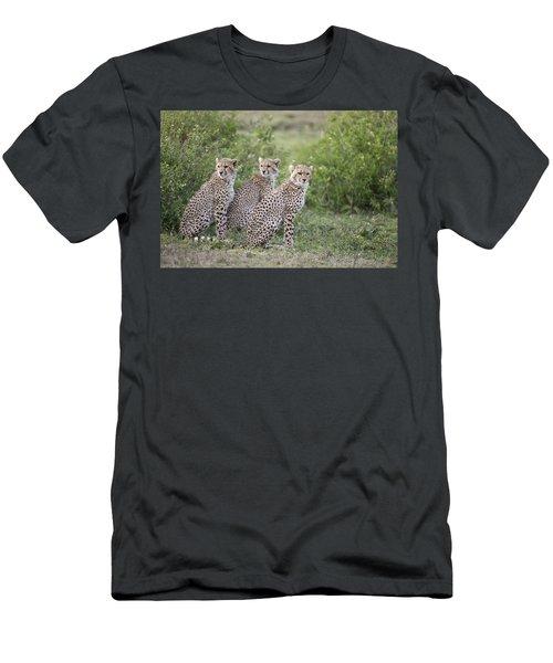 Cheetah Acinonyx Jubatus Cubs Men's T-Shirt (Athletic Fit)