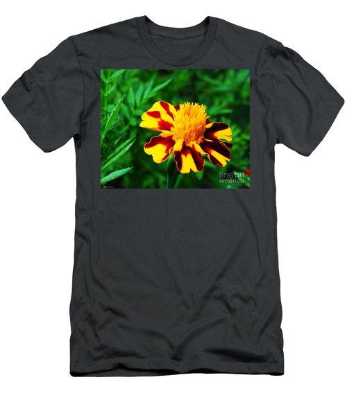 Circus Circus Marigold Men's T-Shirt (Athletic Fit)