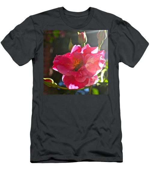 Climbing Rose And Bumble Bee Men's T-Shirt (Athletic Fit)