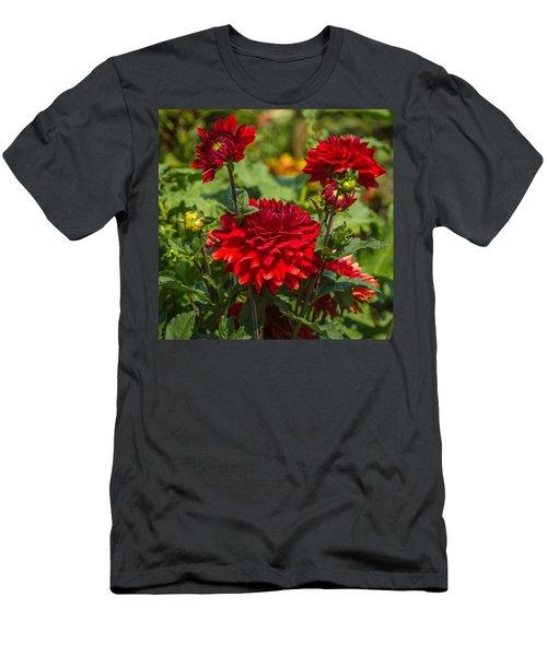 Cluster Of Dahlias Men's T-Shirt (Athletic Fit)
