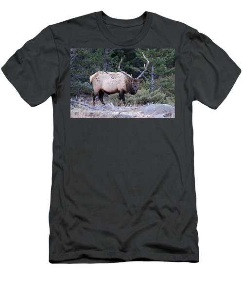 Colorado Bull Elk Men's T-Shirt (Athletic Fit)