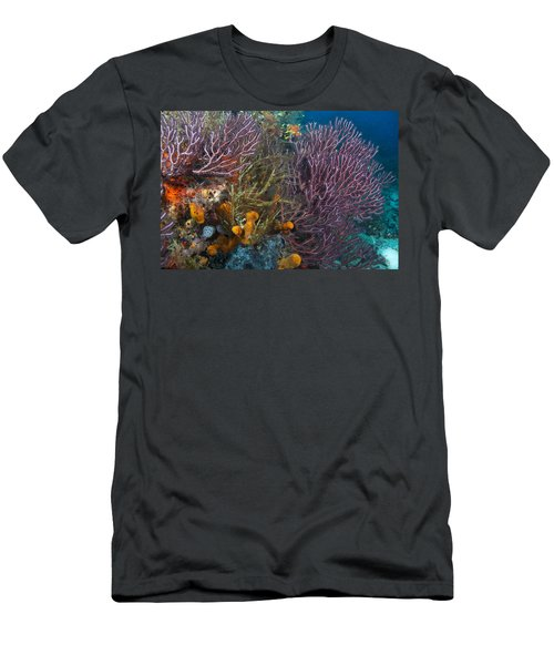 Colors Of Reefs Men's T-Shirt (Athletic Fit)