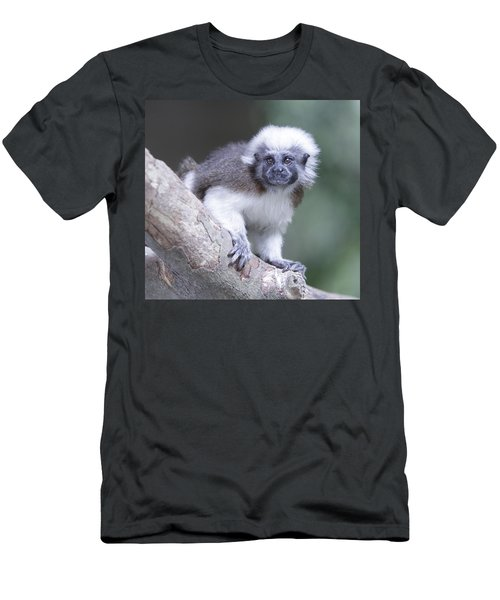 Cotton Top Tamarin  Men's T-Shirt (Athletic Fit)