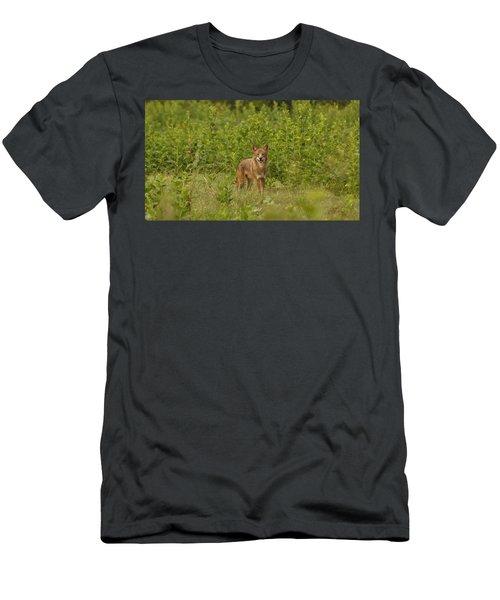 Coyote Happy Men's T-Shirt (Athletic Fit)