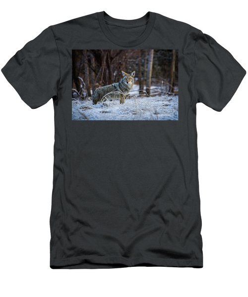 Coyote In The Meadow  Men's T-Shirt (Athletic Fit)