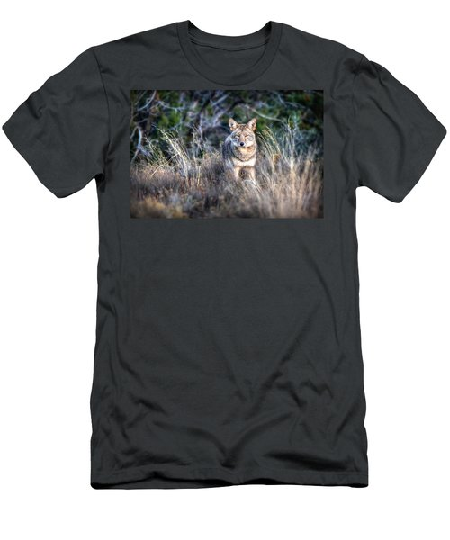 Coyote Stare Down Men's T-Shirt (Athletic Fit)