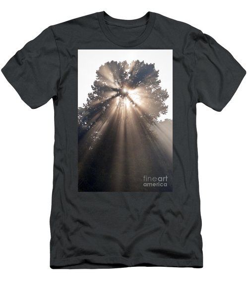 Crepuscular Rays Coming Through Tree In Fog At Sunrise Men's T-Shirt (Athletic Fit)