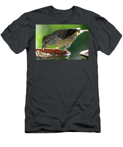 Crossbill Loxia Curvirostra Female Men's T-Shirt (Athletic Fit)
