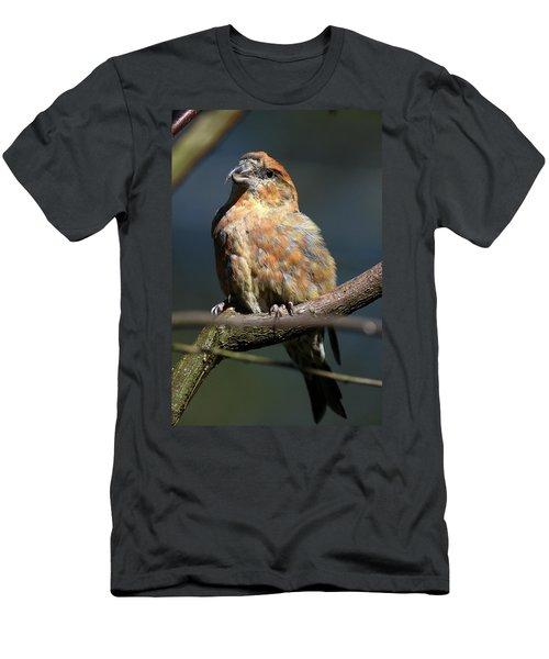 Crossbill Loxia Curvirostra Male Spain Men's T-Shirt (Athletic Fit)