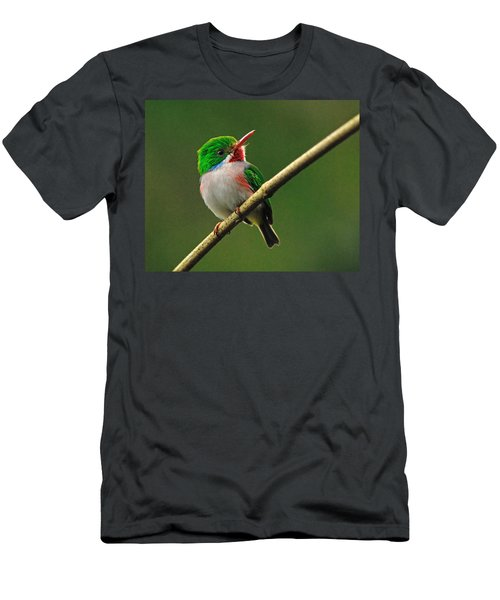 Cuban Tody Men's T-Shirt (Athletic Fit)