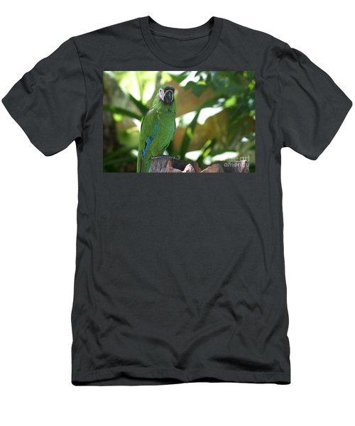 Curacao Parrot Men's T-Shirt (Athletic Fit)