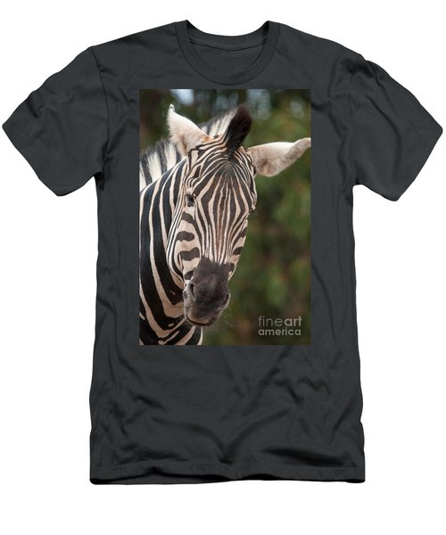Curious Zebra Men's T-Shirt (Slim Fit) by Ray Warren