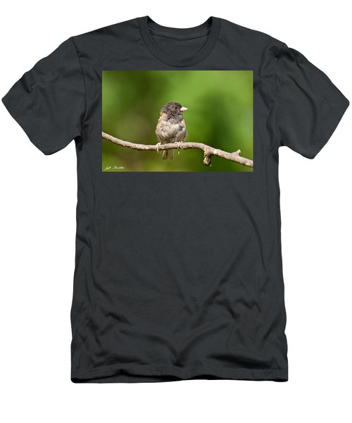 Dark Eyed Junco Men's T-Shirt (Athletic Fit)