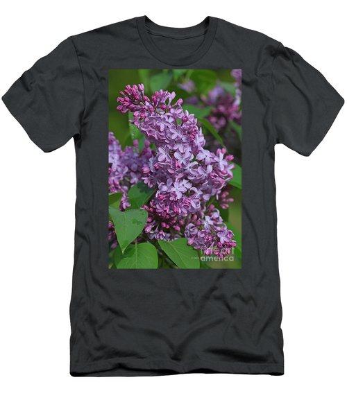 Dawns Lilacs Men's T-Shirt (Athletic Fit)