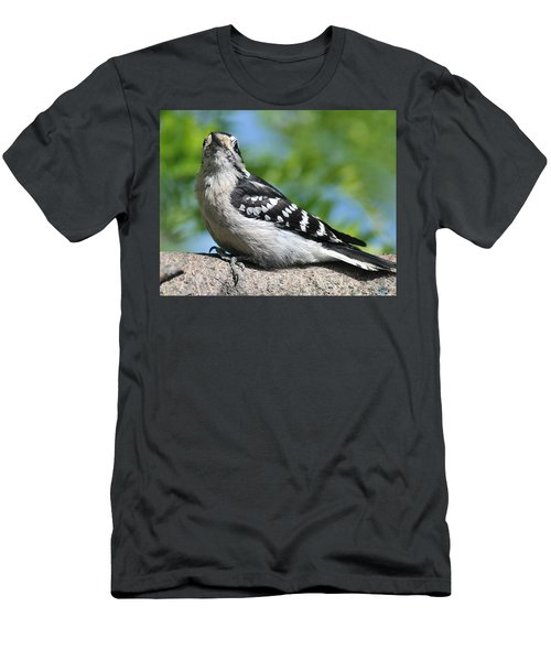 Downy Woodpecker 302 Men's T-Shirt (Athletic Fit)