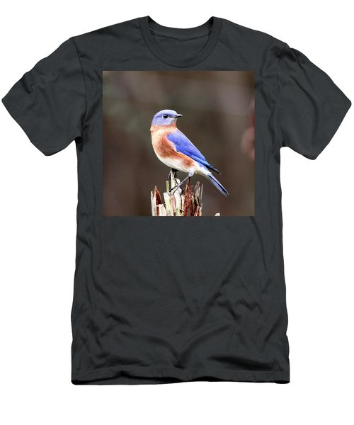 Eastern Bluebird - The Old Fence Post Men's T-Shirt (Athletic Fit)