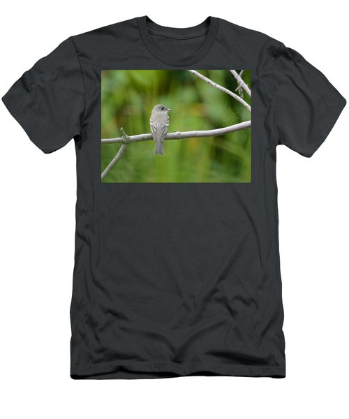 Eastern Wood Pewee Men's T-Shirt (Athletic Fit)