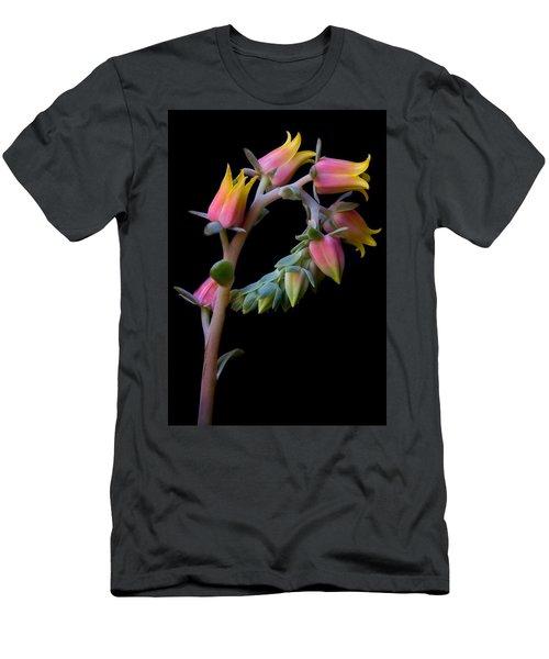 Echeveria Men's T-Shirt (Athletic Fit)