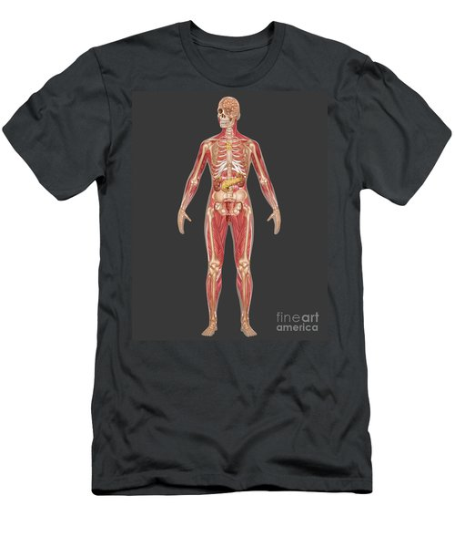Endocrine, Skeletal & Muscular Systems Men's T-Shirt (Athletic Fit)