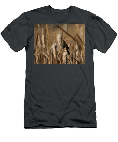 Female Red Winged Blackbird Men's T-Shirt (Athletic Fit)