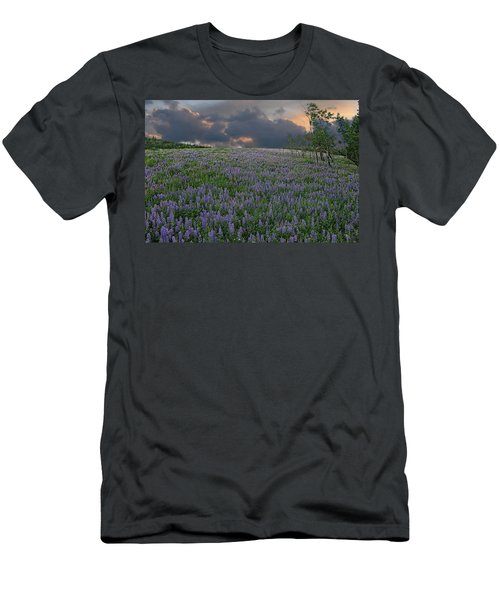 Field Of Lupine Men's T-Shirt (Slim Fit) by Ed Hall