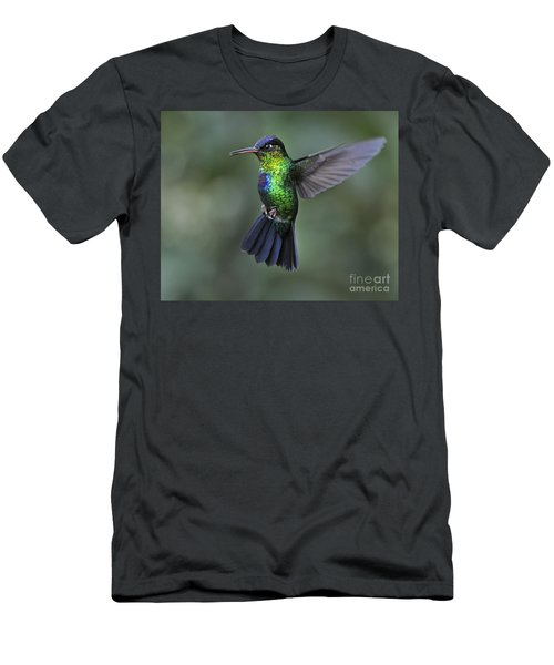 Fiery-throated Hummingbird..  Men's T-Shirt (Athletic Fit)