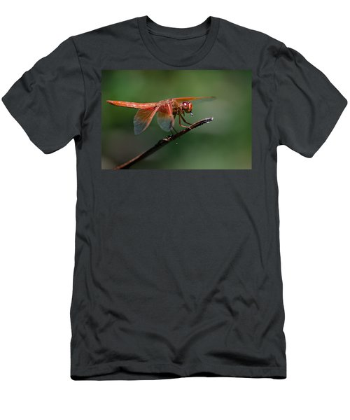 Flame Skimmer Dragonfly Men's T-Shirt (Athletic Fit)
