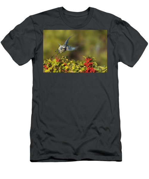 Flying Florida Scrub Jay Photo Men's T-Shirt (Athletic Fit)