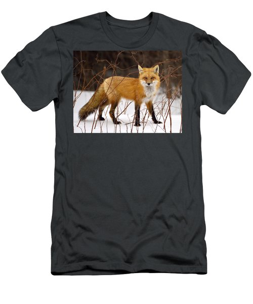 Fox In Winter Men's T-Shirt (Athletic Fit)