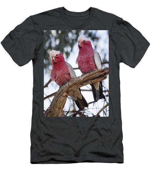 Galahs Men's T-Shirt (Athletic Fit)