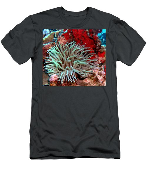 Giant Green Sea Anemone Against Red Coral Men's T-Shirt (Athletic Fit)