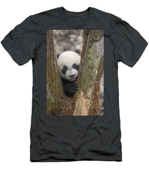 Men's T-Shirt (Athletic Fit) featuring the photograph Giant Panda Cub Bifengxia Panda Base by Katherine Feng