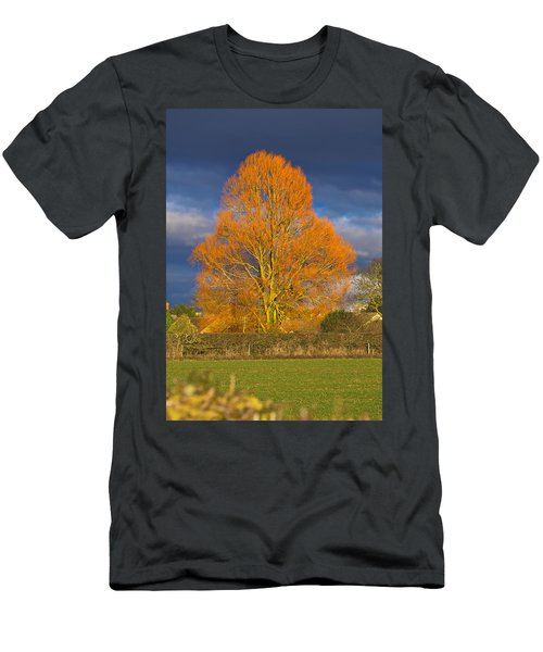 Golden Glow - Sunlit Tree Men's T-Shirt (Athletic Fit)