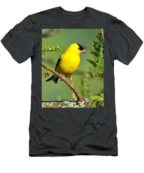 Goldfinch 328 Men's T-Shirt (Athletic Fit)