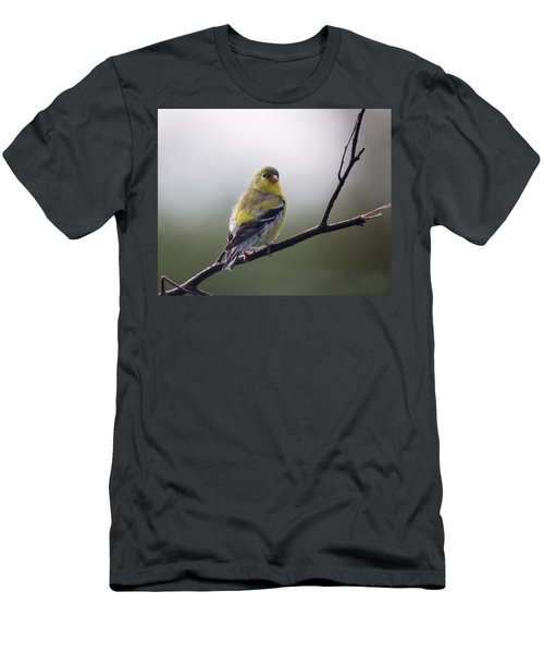 Men's T-Shirt (Slim Fit) featuring the photograph Goldfinch Molting To Breeding Colors by Susan Capuano