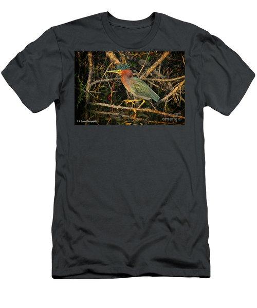Green Heron Basking In Sunlight Men's T-Shirt (Athletic Fit)