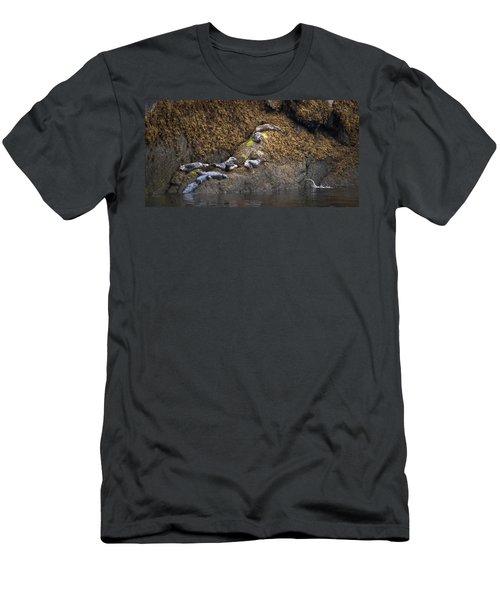 Harbor Seals Men's T-Shirt (Athletic Fit)