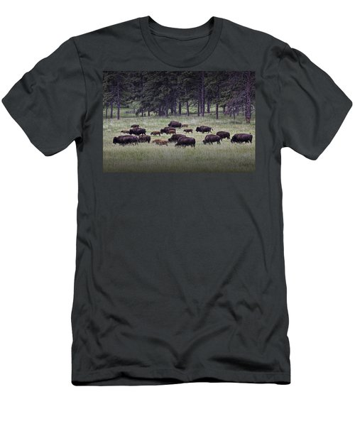 Herd Of American Buffalo Or Bison In Custer State Park Men's T-Shirt (Athletic Fit)