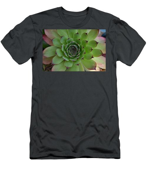 Houseleek Sempervivum Men's T-Shirt (Athletic Fit)