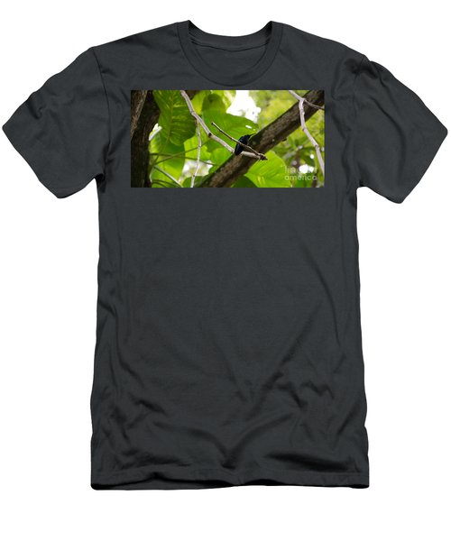 Hummingbird Out On A Limb Men's T-Shirt (Athletic Fit)