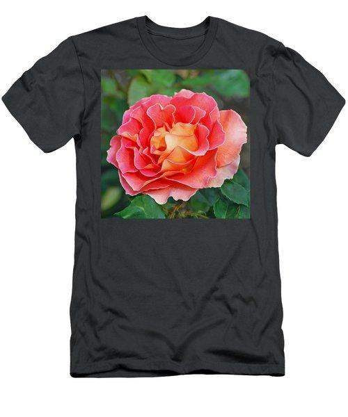 Hybrid Tea Rose  Men's T-Shirt (Athletic Fit)