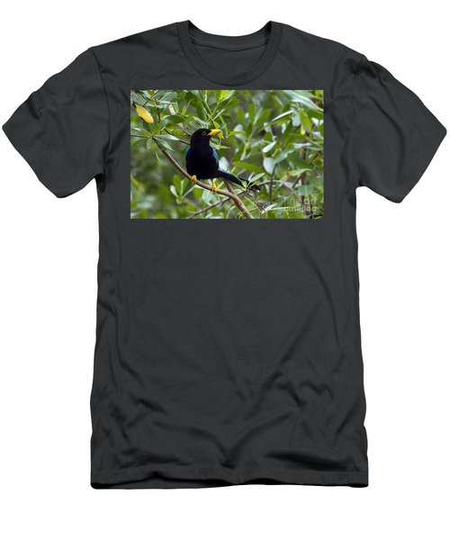 Immature Yucatan Jay Men's T-Shirt (Athletic Fit)