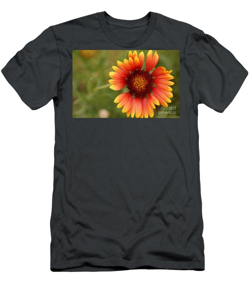Indian Blanket Flower Men's T-Shirt (Athletic Fit)