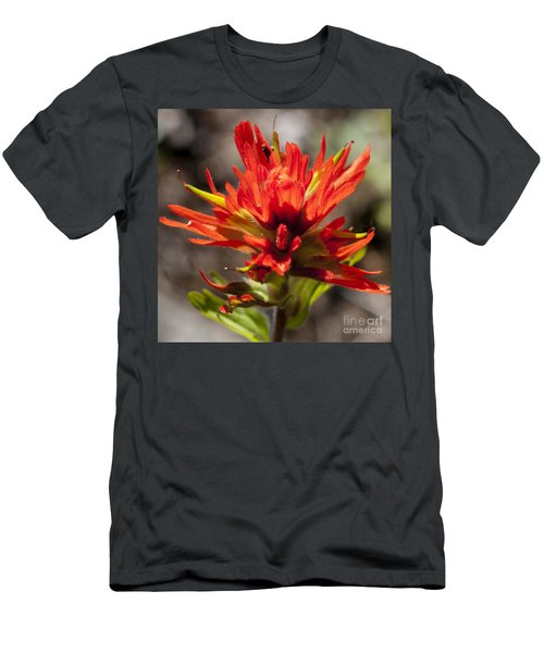 Men's T-Shirt (Slim Fit) featuring the photograph Indian Paintbrush by Belinda Greb