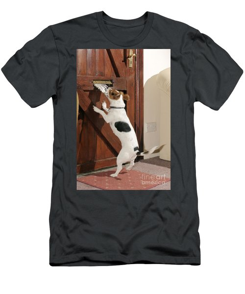 Jack Russell Terrier Gets Paper Men's T-Shirt (Athletic Fit)