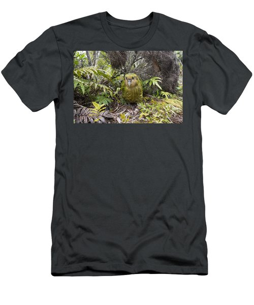 Kakapo Male In Forest Codfish Island Men's T-Shirt (Athletic Fit)