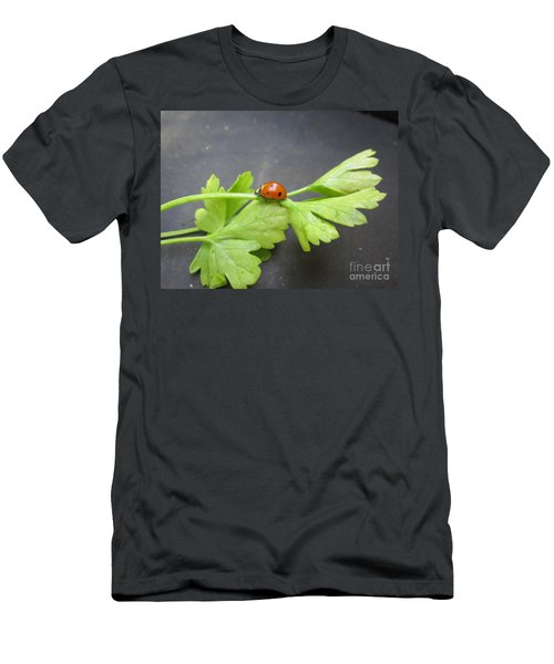 Ladybug On A Parsley Stalk 3 Men's T-Shirt (Athletic Fit)